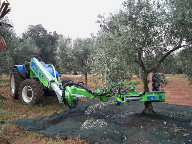 Shakers for mechanized harvesting of olives and hanging ...